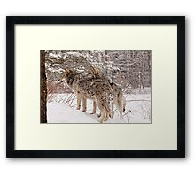 Sibling Love - Parc Omega, Montebello, PQ Framed Print