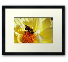 Yellow Flower with Bee Framed Print