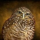 Burrowing Owl by Pat Abbott