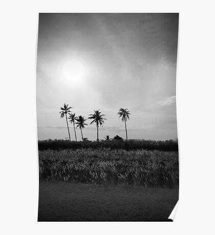 Coconut trees at Kerala, India Poster