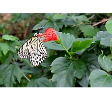 Butterfly on Flower Photographic Print