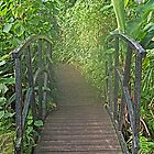 Tropical Bridge way by AmandaJanePhoto