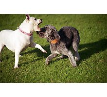 Playtime with Barney Photographic Print