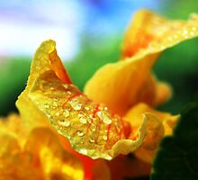 Hibiscus angle by LeiVeLam