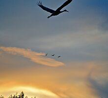 Homeward Bound.... by Karen  Helgesen