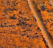 Etched in Orange - I by Marilyn Cornwell