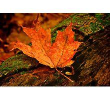 Orange Leaf Photographic Print