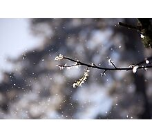 Winter perfection Photographic Print