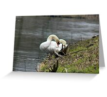 feathering along water bank Greeting Card