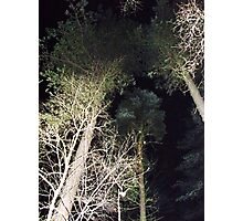 midnight trees Photographic Print