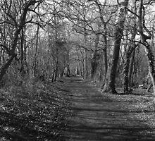 Woodland Path by Amy L Edwards