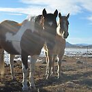 Colorado Horses by LizzieMorrison