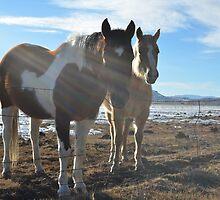 Colorado Horses by LizzieMorrison