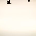 Two Gulls over a Dark Sea by CormacEby