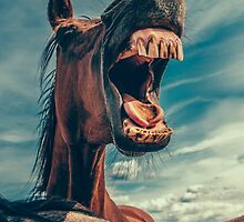 Funny Horse by Wonderful DreamPicture