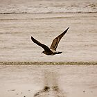 Lone Gull by CormacEby