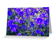 Early Blue Wildflowers Greeting Card
