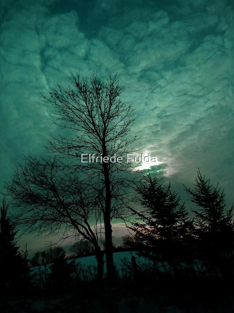 Looking Up ! by Elfriede Fulda