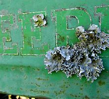 Lichens On The Deere by WildestArt
