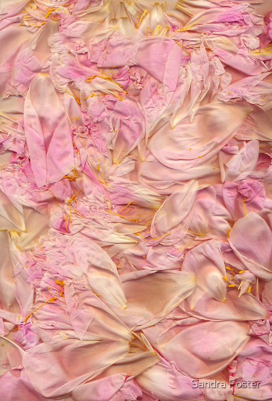 Last Chance To Enjoy Peonies! by Sandra Foster