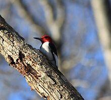 Woodpecker I by Ginger  Barritt