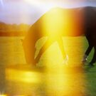 Horse in Light Leak Heaven by iamsla