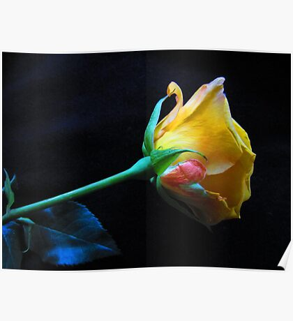 Yellow Rose Of Brooklyn Poster