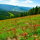 """Views on Vail Mountain"" Vail, Colorado by AlexandraZloto"