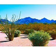 """Desertscape"" Scottsdale, Arizona Photographic Print"