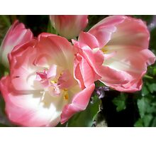 Rose In Pink Photographic Print