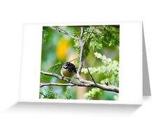 Grey fantail in mid chirp Greeting Card