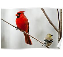 A Male Cardinal and A Finch Share a Limb  Poster