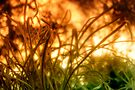 Abstract Grasses by Emma  Gilette