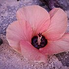 Flower | Hawaii 2012 by RedDash