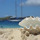 Shell on Castaway Island Fiji by afincher