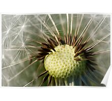 Painted Dandelion Clock Poster