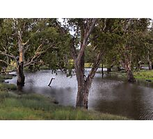 Guy Fawkes River National Park • NSW • Australia Photographic Print