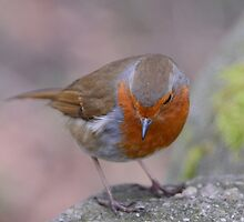 Feathered Friend by Paul Gibbons