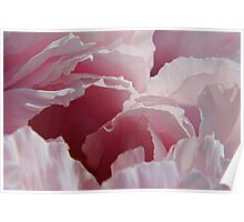 Pink Peony 1 Poster