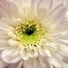 SOFT WHITE by Rocksygal52