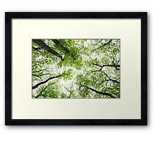 Spring Greenery  Framed Print