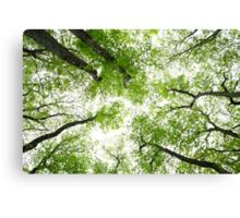 Spring Greenery  Canvas Print