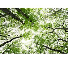 Spring Greenery  Photographic Print