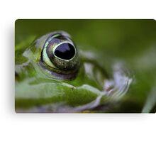 Portrait of wild Waterfrog Canvas Print