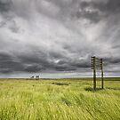 Marshlands of Denmark by Kim Hansen