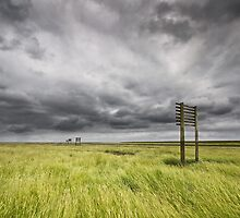 Marshlands of Denmark by Kim Hansen