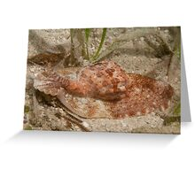 Harp snail, Papua New Guinea Greeting Card