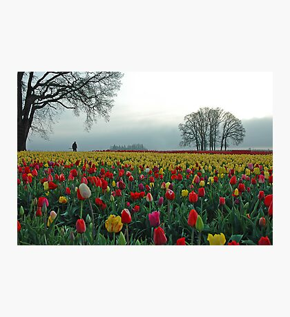 In A Sea Of Color Photographic Print