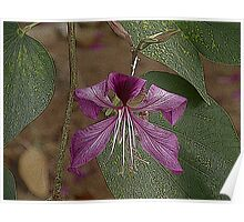 Una bella flor.................. Poster