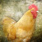 Cock-lock by vigor